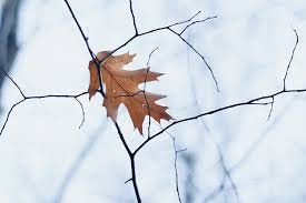 Frosty Fall - A Change of Seasons, A Change of Focus.